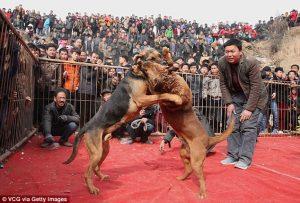 الصين تحتفل بعام الكلاب وتقيم بطولة العالم في العام المقبل