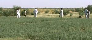 مزارعو السليم يشتكون من فرض رسوم جديدة من إدارة المشروع