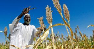 تطور صناعة طحن القمح خصماً على تطور صناعة طحن الذرة في السودان
