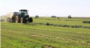 مزارعو ولايتي النيل الأبيض والقضارف يحذرون من فشل موسم الحصاد ويطالبون الحكومة بالتدخل العاجل