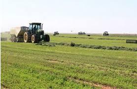 مزارعون بسد مروي يشتكون من الرسوم والجاليات التي تفرضها المحلية