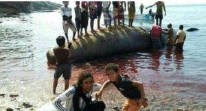 صيادون يمنيون يعثرون على حوت ثمنه 45 مليون ريال سعودي